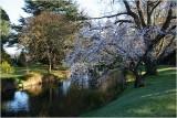 Avon River Botanical Gardens CHCH 3.