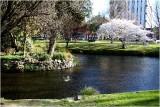 Avon River Christchurch.