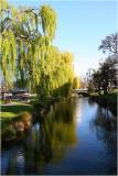 Avon River christchurch. 2.