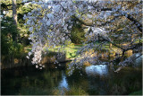 Blossoms Avon River Botanical Gardens CHCH
