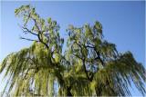Willows on Avon.
