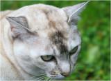 Janices Pussycat