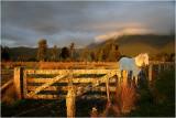 Last of the days Light Near Fox Glacier.jpg