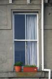 Window on Ponsonby.