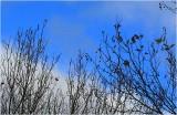 Sky on Ponsonby