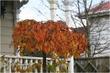 Autumn Tones on Ponsonby.