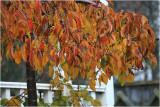 Autumn Tones on Ponsonby II.