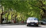 Street Scene on Ponsonby 1