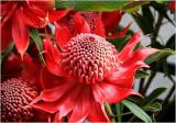 Flowers on Ponsonby 2.