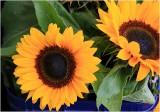 Flowers on Ponsonby
