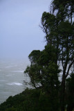Gale force winds pound the costal trees.