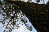 Looking up in the park..Manly