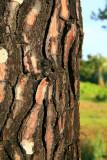 A closer look at the bark.