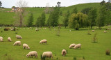 How green are your pastures.jpg