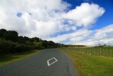 On the road to Te Haruhi Bay Shakespear Reg. Park