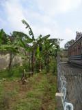08-TVG-Stalavruksham sevvazhai at outer praharam.JPG
