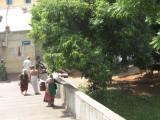The natural beatuy -pradakshiNam around the temple.jpg