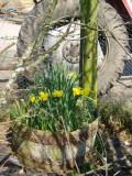 Agricultural spring