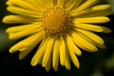 Open Yellow