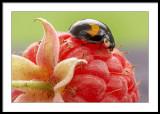 Pudding?...raspberry, I think...