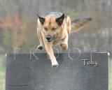 Original Toby Photo