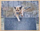 Toby 30 x 24 (Small) Gallery Wrapped Tapestry