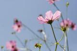 Gallery: ...flowers, my way