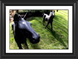 Foals(Watercolor Filter)