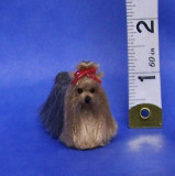 YORKSHIRE TERRIER (SPECIAL ORDER)