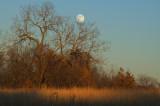 Wolf Moon 2007