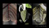 Leaves V
