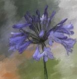 Single Flower by Leslie Arnold  - Sept 2007