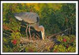 Tending The Nest