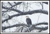 Snowy Perch