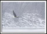 Snowstorm Flight