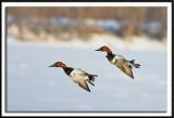 Synchronized Flight