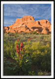Wild Flowers at the Fiery Furnace