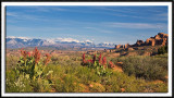 Wildflowers and the La Sal Mountains