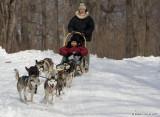 Randonnée chiens de traîneau / Dog Ride