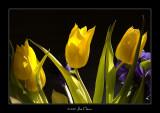 Spring is back IV