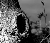 El tronco de Campanita