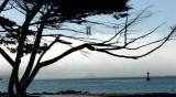 shrouded Golden Gate