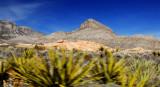 blur cactus