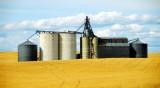 silos and wheatfield