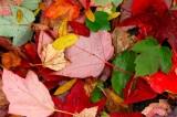 sign of fall season