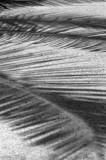 Palm Branches #2.jpg