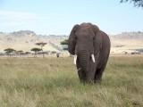 Elephants-0931