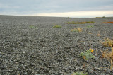 Birdlings Flat - a huge expanse of round, flat pebbles