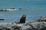 Stopping to watch the seals is a popular pastime on the road north of Christchurch