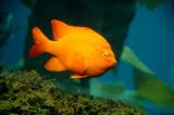 Monterey Bay  - Sealife, Wildlife and More